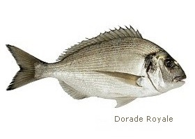 dorade royale